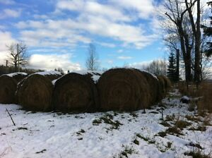 Cow Hay for sale Williams Lake Cariboo Area image 3
