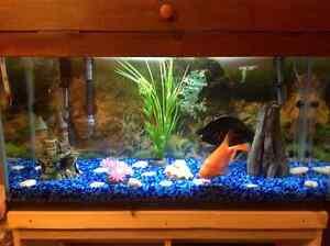 Aquarium 28 gallons (Prix révisé)