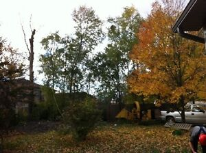 Tip Top Tree Removal and Services Kitchener / Waterloo Kitchener Area image 5