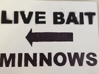 Minnows and Live Bait Lake of Bays