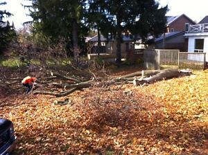 Tip Top Tree Removal and Services Kitchener / Waterloo Kitchener Area image 9