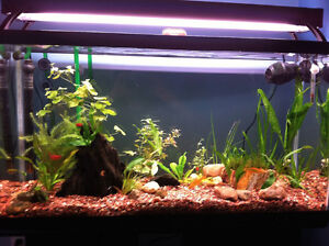 Fish aquarium/tank/stand/everything