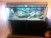 aqua one fish tank 4ft