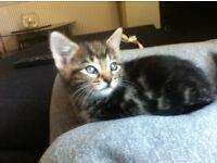 Kitten 4. Sale