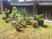 Aloe vera,Evergreen and mixed flower bundle