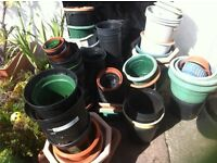 Used plant pots various sizes £10.00 the lot
