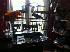 Baby Green Cheek Conure & cage/stand