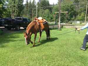 Beautiful 6 year old mare for sale