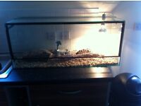 Baby horsefield tortoise with full setup and extras