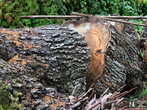 Free wood for firewood or carving