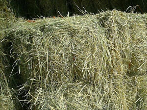Horse Quality, Hay Bales for Sale!