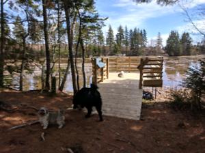 Pet Sitting/Pet Walking/Home Visit Services