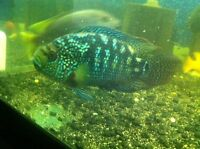 Large fish for sale