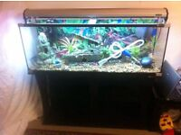 Aqua one 4ft fish tank