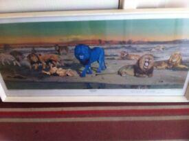 Picture the blue lion