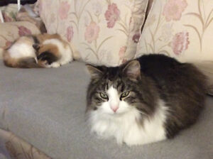 PET SITTING in MY HOME in QUISPAMSIS
