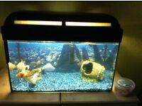 Fish tank and 3 fish