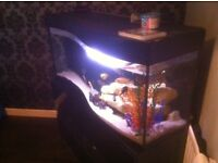 4ft curve front fish tank