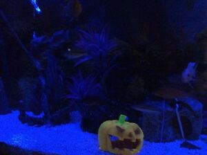 55 Gallon fish tank and accessories aquarium  Cambridge Kitchener Area image 4