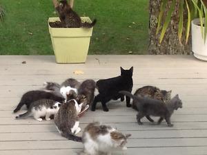 Plusieurs chatons disponibles