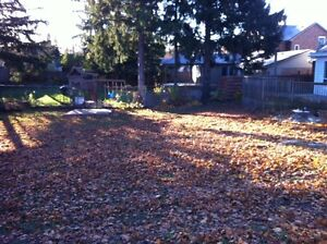Tip Top Tree Removals and Services Stratford Kitchener Area image 8