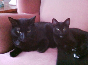 I will pay $200/mth. to take care of my  2 Beautiful Black Cats