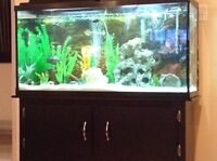 60 gallon tank with stand