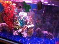 29 Galen fish tank with fish and food