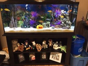 55 Gallon fish tank and accessories aquarium  Cambridge Kitchener Area image 2