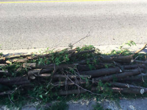 Free Cedar logs  - Curbside -  Great Firewood /Kindling