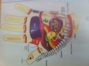 Hand and foot reflexology posters  Prince George British Columbia image 1