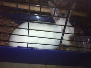 Bunny for sale!! Needs a home ASAP
