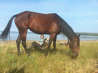 4 yr old Standardbred mare to good loving home