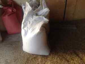 Oats for horses 20kg bags.