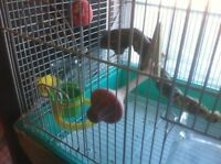 4 Finches and Cage.  FREE FREE