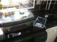pink salmon tarantula wi full set up for sale