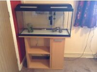 Tropical/ cold water fish tank