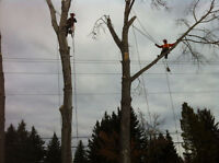 Tree Service - removals, pruning, stump grinding