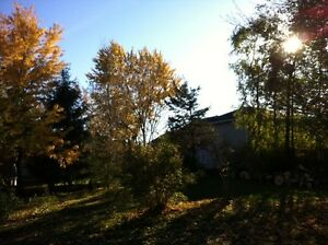 Tip Top Tree Removal and Services Cambridge Kitchener Area image 4