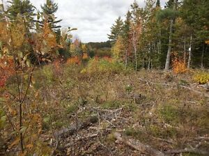 1+/- Acre Building Site 8 - Ellershouse Landing: HWY #1