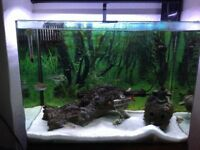 Aqua one fish tank and accessories