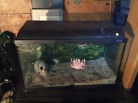 Aquarium setup for tropical fish