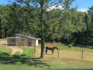 Will provide a Forever Home for a Beginner Safe Horse