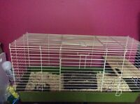 Guinea Pig cage with extras