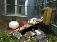Bunnies for sale!