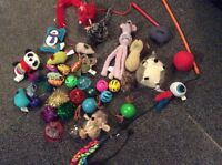 Tons of new cat toys