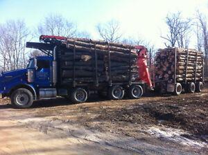 Log lengths : Firewood for sale