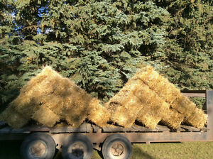 Straw bales small square