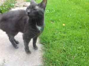 Stray grey young cat looking for a home
