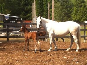 Beautiful Yearling Filly - Great Prospect!!!